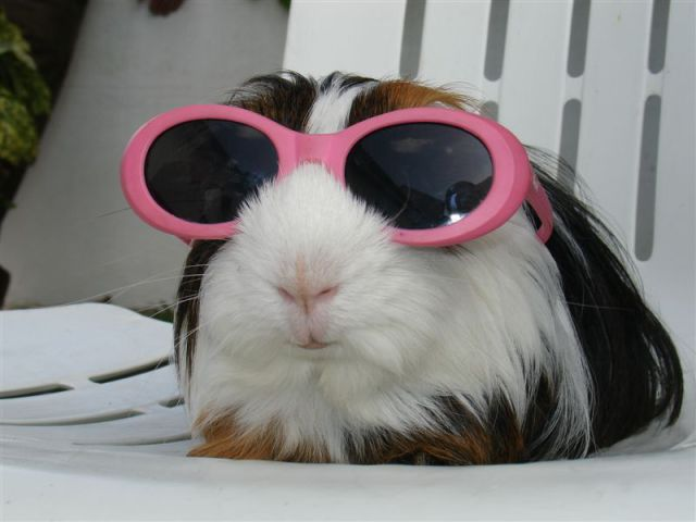Cool-Picture-Of-Dog-In-Sun-Glasses-Funny-Animal